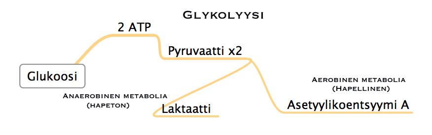 glykolyysi
